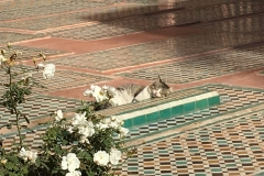 Cat in Marrakesh, Morocco