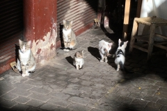 Cats in Marrakesh, Morocco